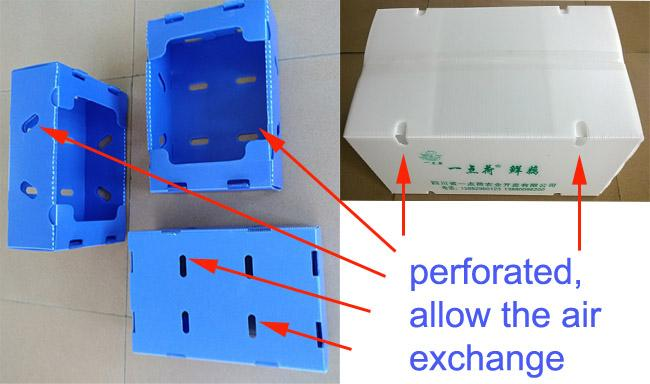 Corrugated Plastic Boxes Made From Corrugated Polypropylene